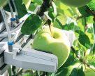 В Беларуси создали робот для сбора яблок