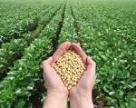 В Україні вперше зібрано понад 4 млн тонн сої