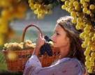 Українські винороби переробили 254 тисячі тонн винограду