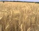 Засуха влияет на цены на продовольствие в Европе