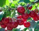 Рушії українського садівництва