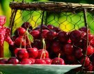 Чили стала топ-поставщиком вишни, яблок, голубики в Китай