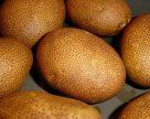 В США одобрили три сорта ГМО-картофеля