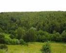 Україна та Словенія співпрацюватимуть у лісовій справі