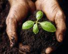 На факультете агробиологии и земельных ресурсов СтГАУ изобрели биоудобрение