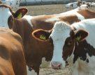 Середня ціна на молоко за тиждень в Україні зросла на 2 копійки