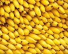 ФАО выделяет $98 млн на борьбу с заболеванием бананов