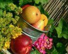 В Украине ягоды станут деликатесом, а потери яблок и груш