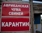 Россельхознадзор оценил общий ущерб от АЧС в 75 млрд российских рублей