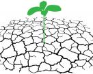 Фізіологічна роль елементів живлення у підвищенні стресостійкості рослин