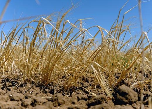 На Херсонщині поширюється та поглиблюється грунтова посуха