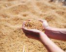 Евросоюз в этом сезоне соберет 2,7 млн тонн сои