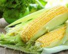 Компания DuPont Pioneer Украина представила результаты агрономических опытов для кукурузы