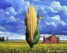 Отчет Департамента сельского хозяйства США (USDA) о мировом рынке кукурузы