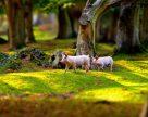 От земледелия к свиноводству и биоэнергетике – путь KSG Agro