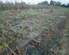 Июльские ураганы уничтожили 4-хлетние фруктовые деревья