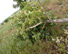 Ураган знищив кілька садів на Закарпатті
