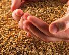 Урожайность озимой пшеницы в Кировоградской области