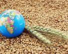 Индийские трейдеры закупили 300 тыс. тонн украинской мукомольной пшеницы.