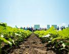 Типичные ошибки агрономов в нетипичный для подсолнечника сезон