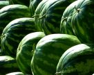 Цены на арбузы в Украине установили исторический рекорд