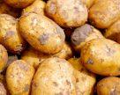 Україна: цьогоріч виробництво картоплі може сягнути 9,3 млн тонн