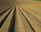 Бездумна інтенсифікація виробництва вбиває родючість грунтів