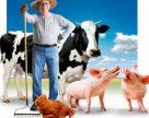 Дрібні аграрії в Україні позбавлені державної підтримки
