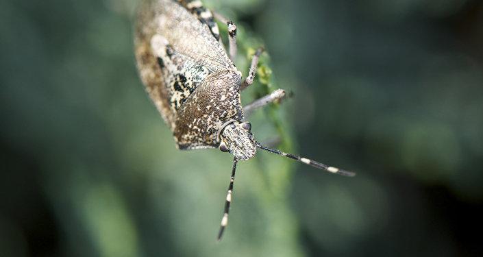 насекомые абхазии фото с названием