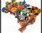 Потребление удобрений в Бразилии в текущем сезоне увеличится, но закупки будут отложены