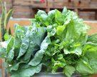 Спрос на органические удобрения стремительно растет