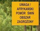 Польские свиноводы призывают построить забор на восточной границе из-за угрозы АЧС
