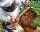 Вчитися у бджіл згуртованості