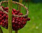 Украинские производители по итогам выставки в Гонконге получили предложения на поставки яблок и черешни