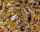 Гибель пчел: пестициды не виноваты?