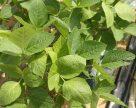 Урожайность сои в Житомирской области на уровне прошлогодних показателей