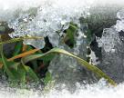 Готуй сані восени, або як забезпечити успішну  перезимівлю озимих
