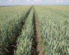 Агрохолдинги придивляються до органічного виробництва