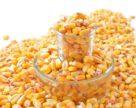 Украина экспортировала 150 тыс. т пшеницы и 101 тыс. т кукурузы за неделю