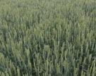Через завышенные цены на минудобрения АПК Украины недополучил урожай на суму более 32 млрд грн