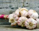 В Украине растет спрос на семенной чеснок