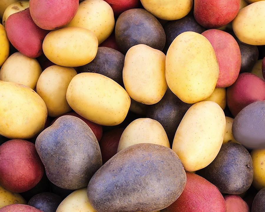 Картофель цветной расы начали выращивать в Украине