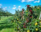 «Детский сад» для фруктового сада