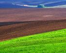 Фітосанітарний стан сільськогосподарських рослин станом на 16 березня 2018 року