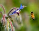Ограничения использования неоникотиноидов касаются большинства используемых в настоящее время пестицидов