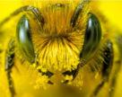 Bayer желает оказывать положительное влияние на здоровье пчел