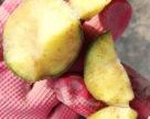 Почему необходимо проводить клубневой анализ семенного картофеля