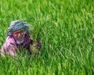 Бангладеш импортирует в будущем году 1,75 млн тонн калия и диаммонийфосфата