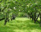 Фітосанітарний стан сільськогосподарських рослин станом на 20 квітня 2018 року