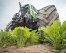 Кто вырастит половину всей украинской сахарной свеклы?